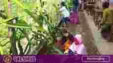 Siswa SD di Banjarsari