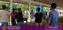 Pasar Ternak di Banjarsari Ciamis
