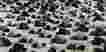 Masjid di Jabar