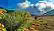 Alasan Tidak Boleh Memetik Bunga Edelweis Jangan Sampai Punah