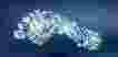 Jejak Digital di Internet