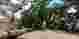 Pohon Besar di Ciamis Tumbang
